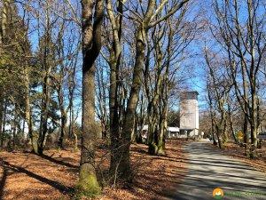Auf-den-Hoehen-des-Ebbegebirge-11