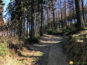 Auf-den-Hoehen-des-Ebbegebirge-09