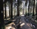 Auf-den-Hoehen-des-Ebbegebirge-18