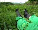 CEP-Outdoor-Merino-Mid-Cut-Socks-16