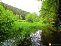 Felsenland-Sagenweg-Etappe1-11