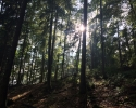 Felsenland-Sagenweg-Etappe1-31