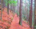 Felsenland-Sagenweg-Etappe2-04