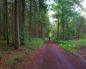 Felsenland-Sagenweg-Etappe3-26