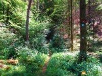 Felsenland-Sagenweg-Etappe4-11