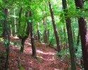 Felsenland-Sagenweg-Etappe4-18