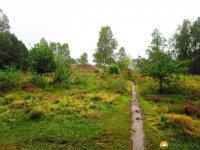 Heidschnuckenweg-Buchholz-Undeloh-09
