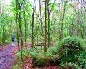 Heidschnuckenweg-Buchholz-Undeloh-15