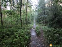 Heidschnuckenweg-Fischbek-Buchholz-19
