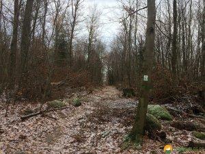 Huegelgrabwanderung-Odenwald-14