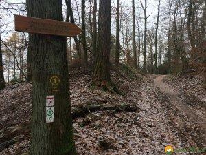 Huegelgrabwanderung-Odenwald-15