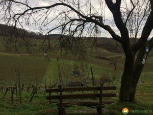 Huegelgrabwanderung-Odenwald-20