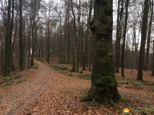 Huegelgrabwanderung-Odenwald-18