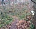 Huegelgrabwanderung-Odenwald-05