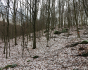 Huegelgrabwanderung-Odenwald-12