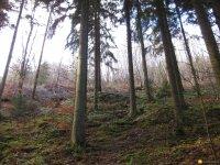 bloggerwanderung_kall_trail_westwall04