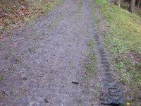 bloggerwanderung_kall_trail_westwall07