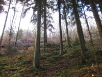 bloggerwanderung_kall_trail_westwall04
