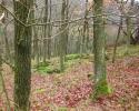 bloggerwanderung_kall_trail_westwall09