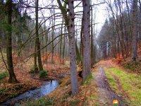 Naturschutzgebiet_Holthauser_Bach_18
