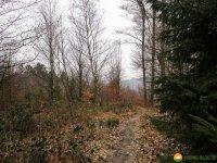 Naturschutzgebiet_Holthauser_Bach_19
