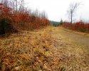 Naturschutzgebiet_Holthauser_Bach_06