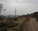 Naturschutzgebiet_Holthauser_Bach_07