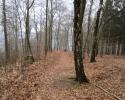 Naturschutzgebiet_Holthauser_Bach_25