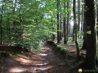 Nord_Ostsee_Wanderweg_Albersdorf_Elsdorf_01