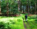 Nord_Ostsee_Wanderweg_Elsdorf_Westensee_13