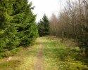 sauerland-waldroute11