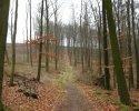 sauerland-waldroute02
