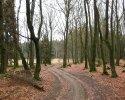 sauerland-waldroute08