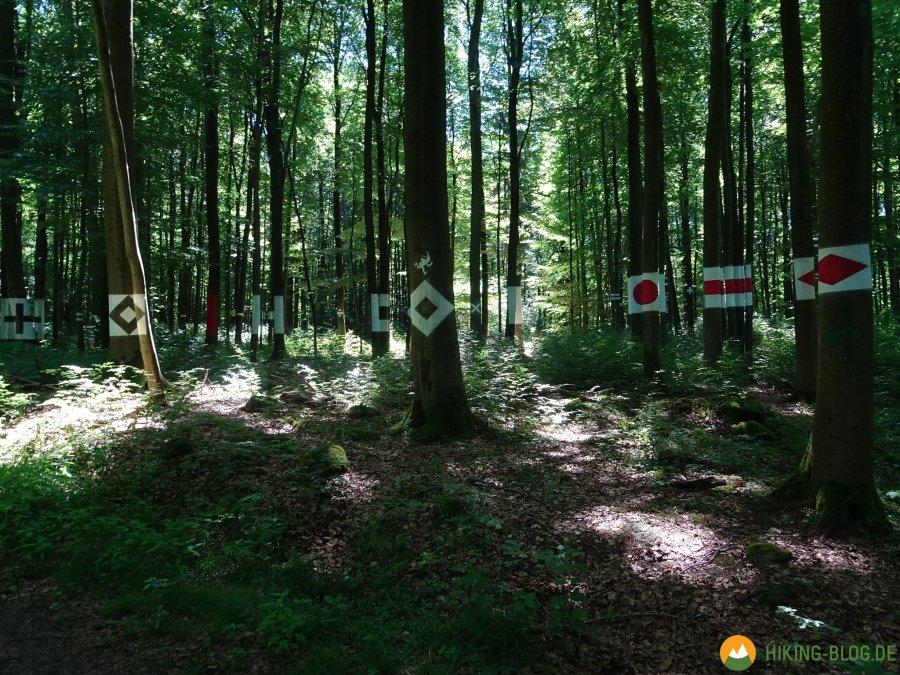 Spessartbogen-Etappe4-12