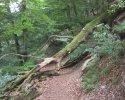 auf-dem-urwaldsteig_hemfurth_nieder-werbe14