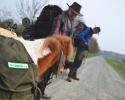 Wandern_mit_Pony_01