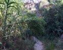 Wanderung-Rio-Seco-12