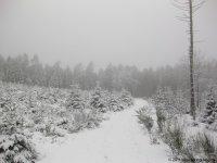 naturpark_ebbegebirge_4809
