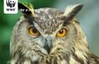 Mein guter Vorsatz für 2012: Ich werde Naturschutzorganisationen unterstützen