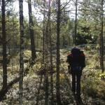 7 Tipps für ein glückliches und sorgenfreies Wandern in Schweden
