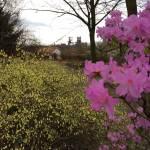 Warum ich Sehnsucht nach dem Frühling habe