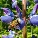Wie Du Dich verhalten solltest, wenn Du beim Wandern auf Bienen, Wespen oder Hornissen triffst