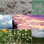 Das 1x1 der Wettervorhersage in der Natur