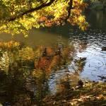 Die Schattenseiten der warmen Temperaturen im November und eine Wahrheit, die dir nicht gefallen wird