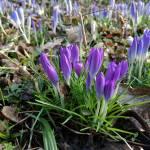 Ich habe Sehnsucht nach Frühling!