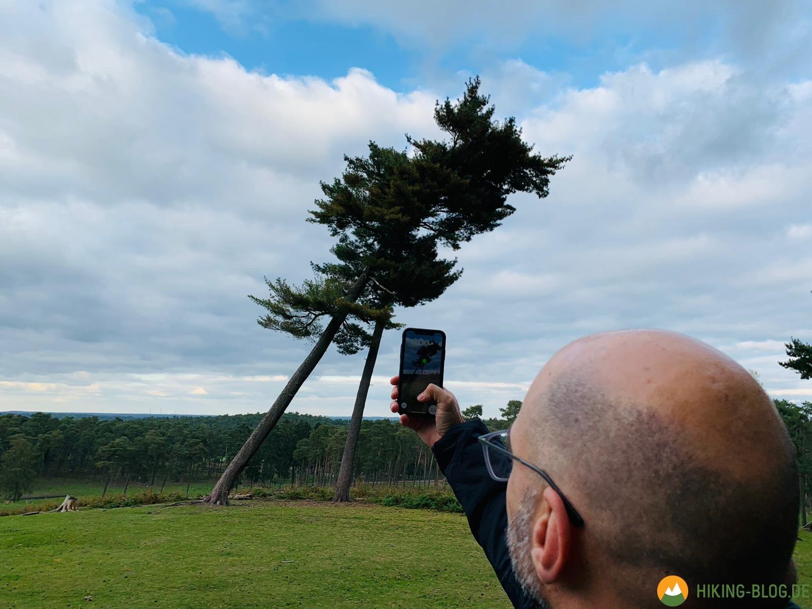 Beim Wandern mit der kostenlosen App Arboreal die Baumhöhe messen