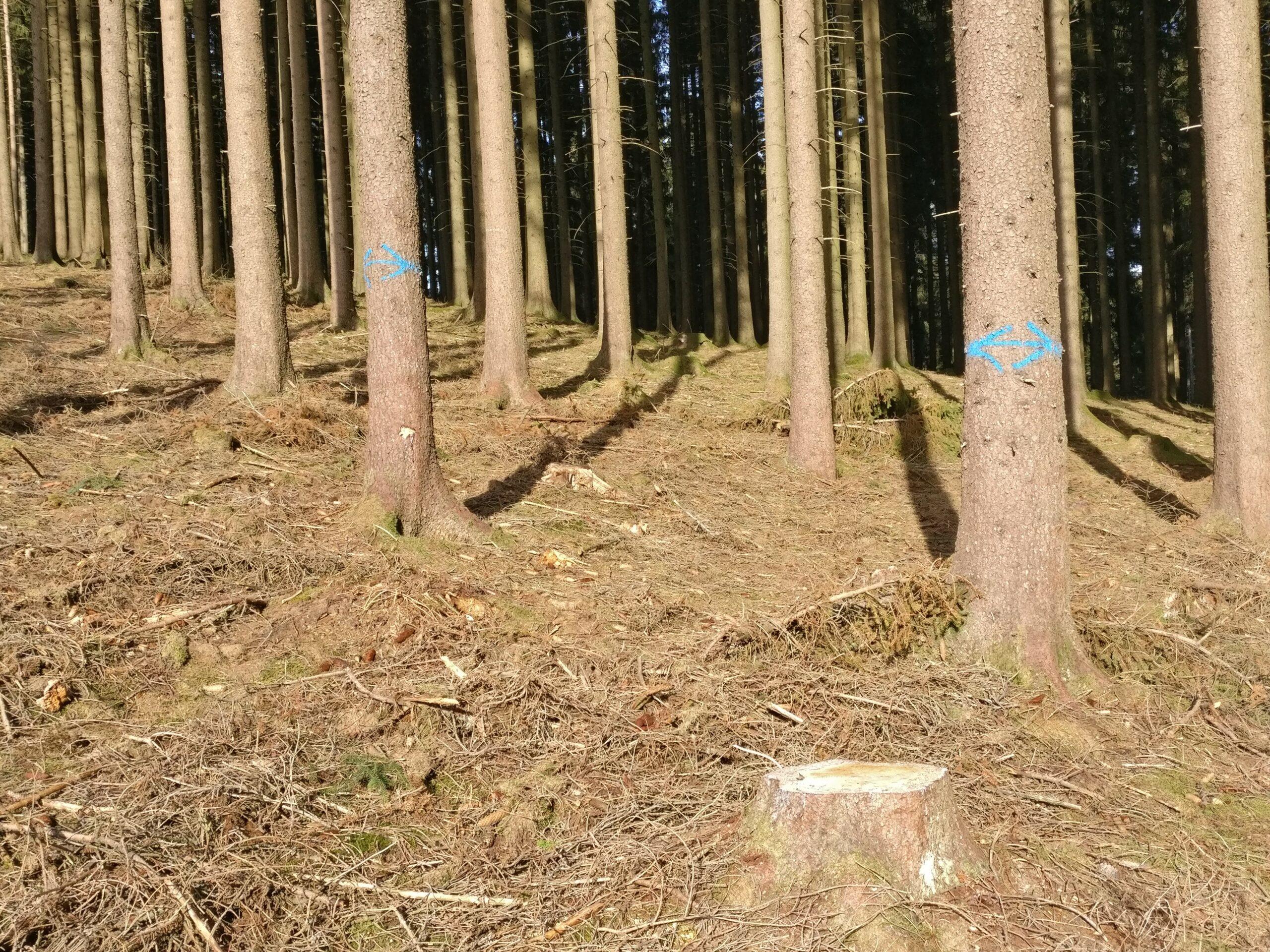 Baummarkierungen für eine Grenze