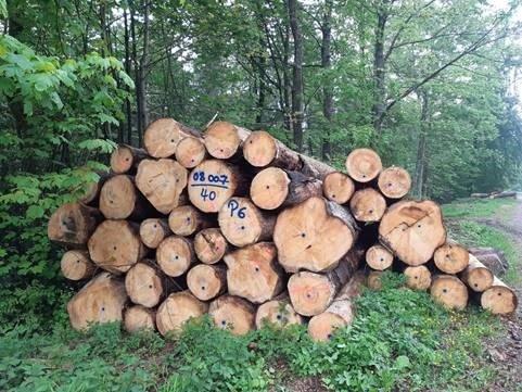 Baummarkierungen an einem Polter