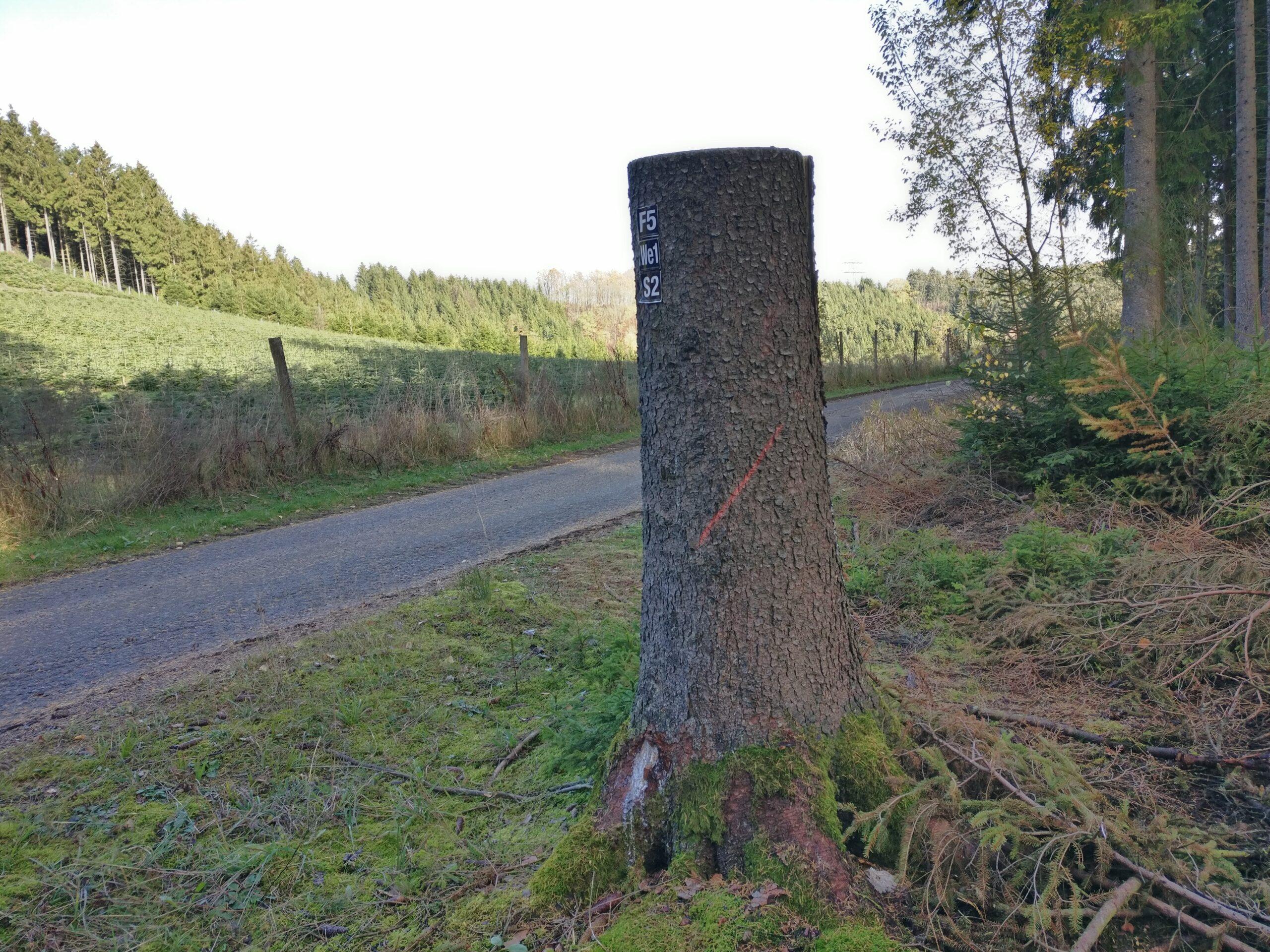 Baummarkierungen Schraegstrichfällung