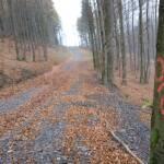 Diese Bedeutung haben die bunten Baummarkierungen im Wald
